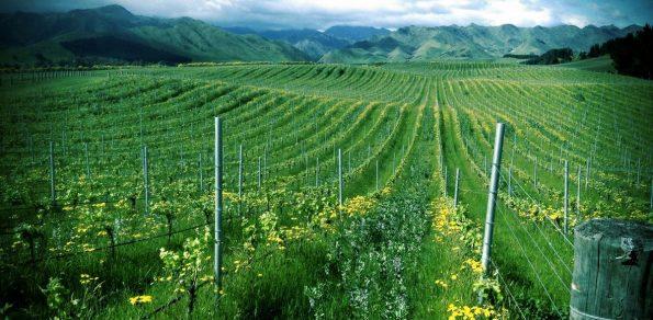 churton vineyard