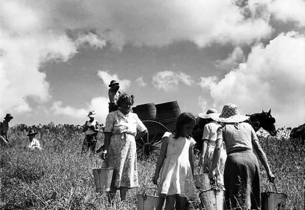 workers in field with buckets and horses